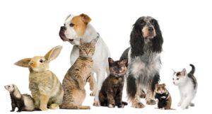 norme sanitarie animali da compagnia in europa